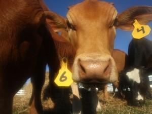 Florida couple make farm fresh start