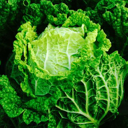 Farm Focus: Minuet Cabbage