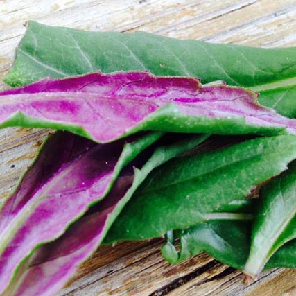 Farm Focus: Okinawa Spinach